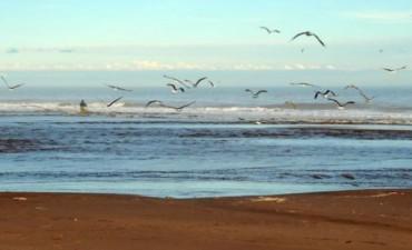 Monte Hermoso tendrá su terminal pesquera