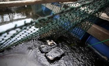 Chocaron dos barcos y hay 300 toneladas de petróleo derramadas en el mar