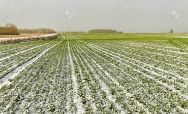El clima severo impacta sobre la agricultura de Estados Unidos