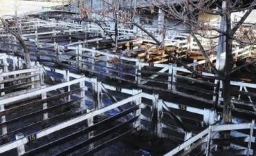 El mercado de hacienda cierra mixta por disparidad en calidad de animales