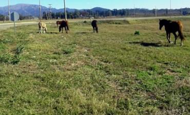 San Agustín: Circular con precaución por presencia de caballos sueltos
