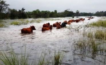 El precio de la carne subirá si continúan las lluvias intensas