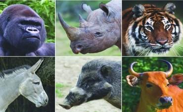 El planeta se queda sin sus grandes bestias