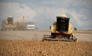 La soja, que se hunde más de 2,1% en Chicago por la crisis que golpea a Brasil