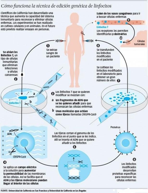 Técnica de linfocitos terapia inmunitaria