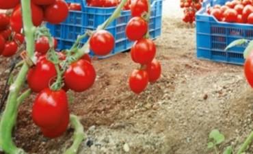 Describen el genoma del tomate silvestre