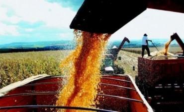 El Gobierno recortaría más de 35% el precio del bioetanol de maíz