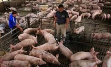 La producción de carne porcina subió un 8,7% y el consumo un 10,5%