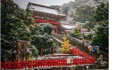 En fotos: nieva en Tokio en noviembre después de más de 50 años