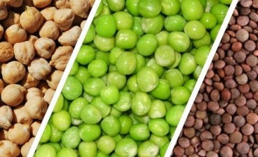 Brindarán créditos a productores de legumbres