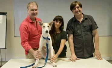 Llegó Antony, el primer perro clonado de América Latina