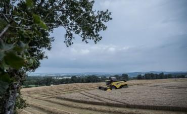 El trigo no para de sorprender en Còrdoba con picos de casi 100 quintales