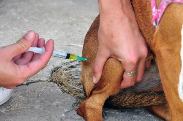 Inició la campaña de vacunación antirrábica