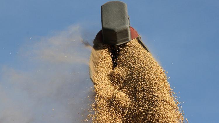 La Soja Argentina cerro con ganancias a la par de Chicago