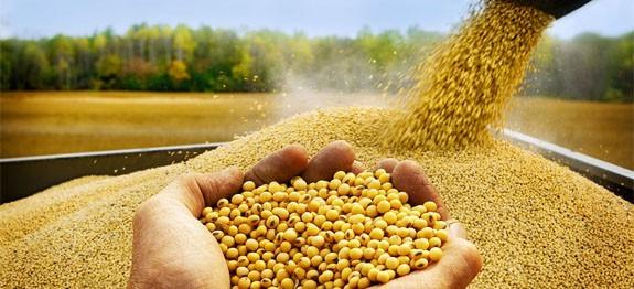 La Soja cierra en baja, el maíz sin cambios