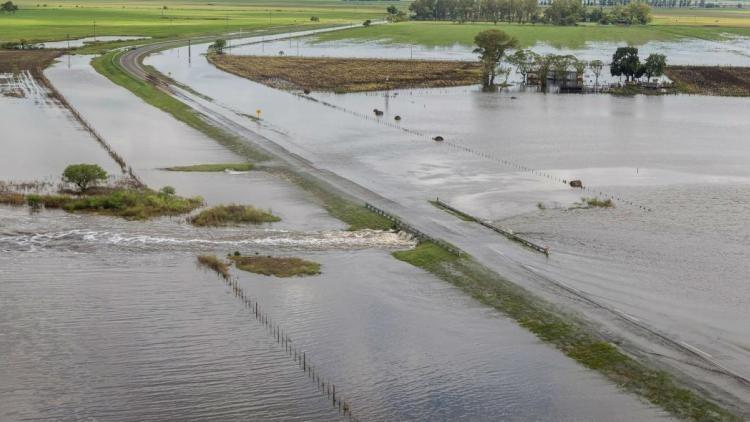 Peligran 2,2 millones de hectáreas con soja