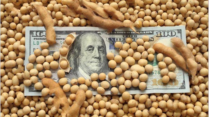 La soja superó hoy los USD 500 por tonelada