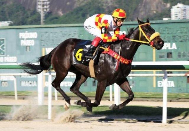 Jorge Ricardo alcanzó los 13.000 triunfos con Gloria Negra