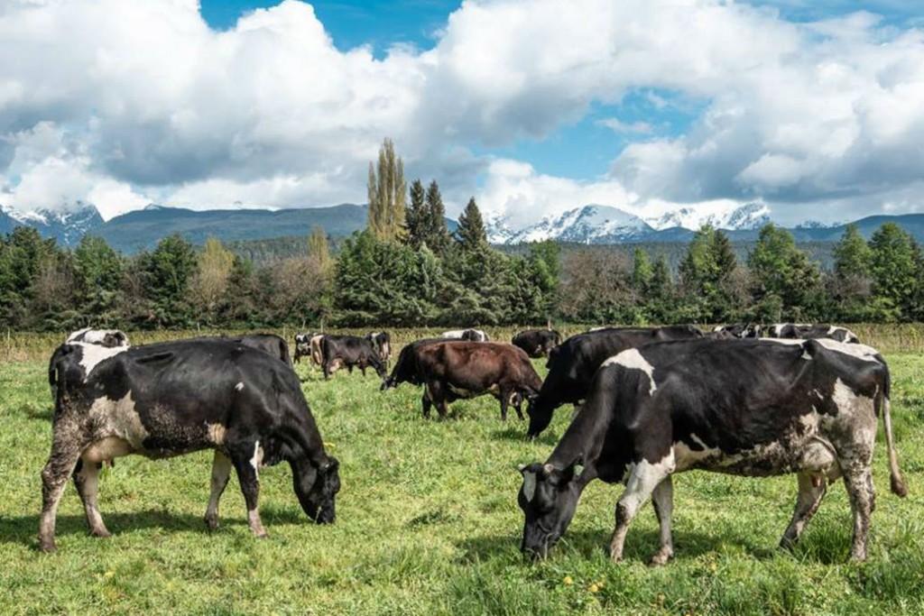 Los productores lecheros rechazan el 'desacople' en el mercado