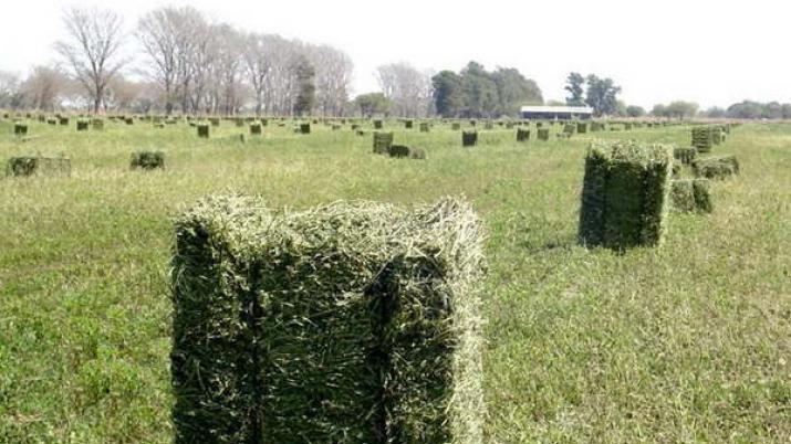 Inversión privada exportara alfalfa a Dubai y Emiratos Árabes