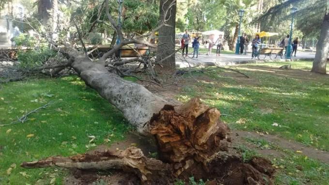 El Viento Zonda causa destrozos en Mendoza