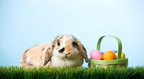 Pascuas:Resurrección y Amor