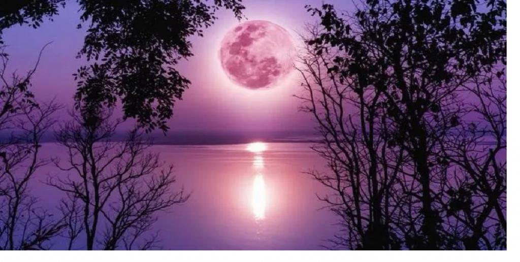 La superluna rosa se la vio en todo el mundo