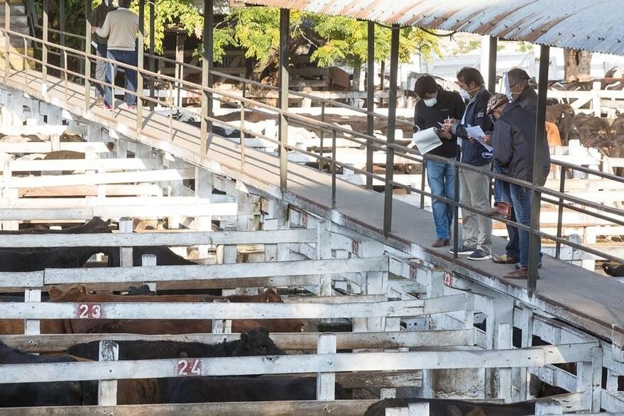 La creciente demanda bajó el valor de la hacienda en el Mercado de Liniers