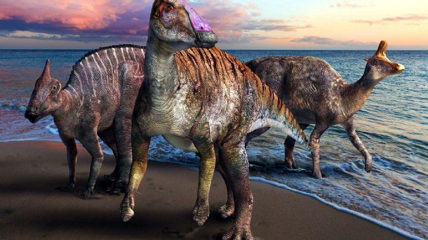 Reconocen un nuevo dinosaurio pico de pato