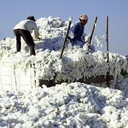 Nuevo sistema para el movimiento de algodón