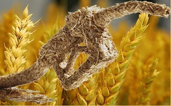 El bioetanol autorizado aumentos de hasta el 9%