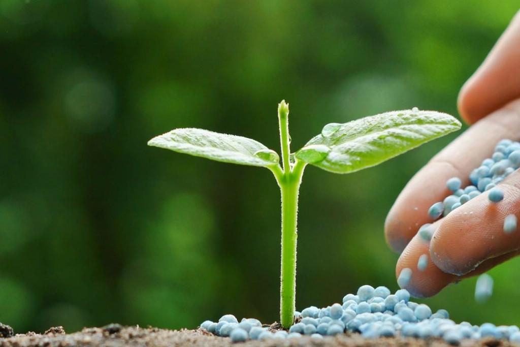 El aumento en la tasa de importación encarecerán fertilizantes y agroquímicos