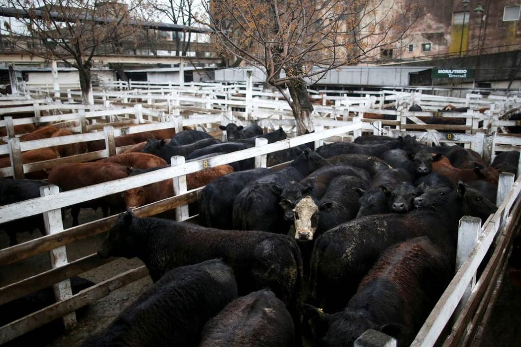 El Mercado de Liniers finalizo con descenso del valor de la hacienda