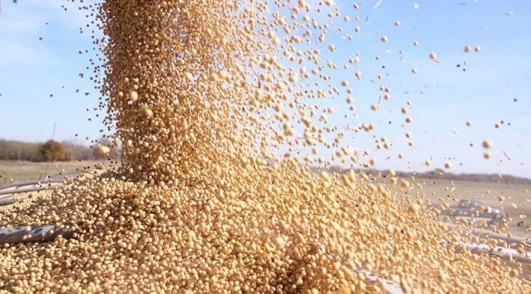 Chicago: la soja cayó fuerte y quedó por debajo de los U$S 600