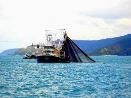 Pesca ilegal: Entra en vigor el primer tratado mundial