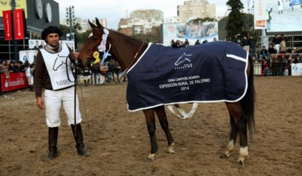 Gran Campeón Hembra Polo Argentino, propiedad de David Nalbandián en La Rural
