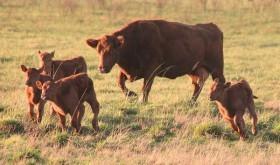 La producción de soja se despide de las zonas extrapampeanas