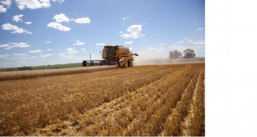 Se estimó una siembra récord con 8,25 millones de hectáreas de Trigo y Cebada