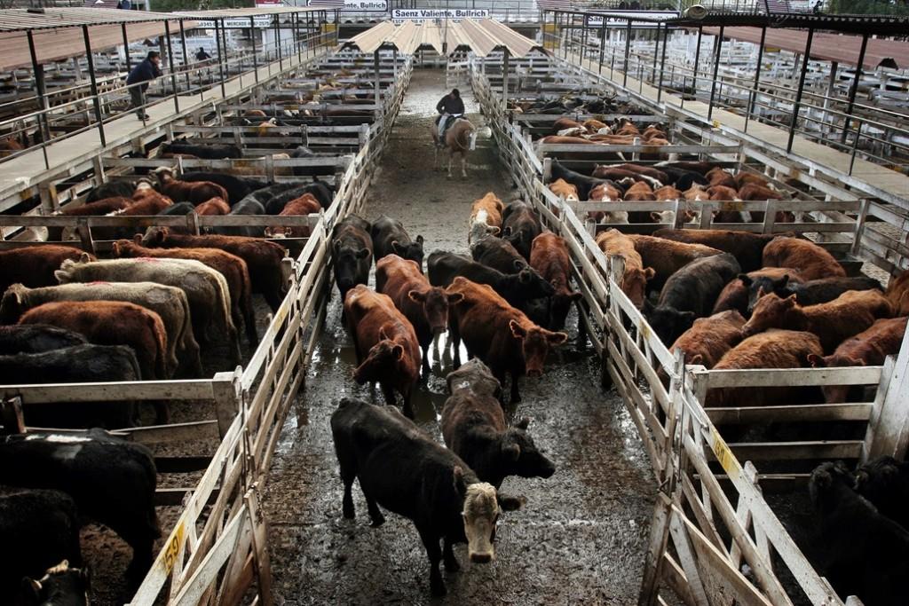 Mercado de Liniers:Bajó el valor de las vacas