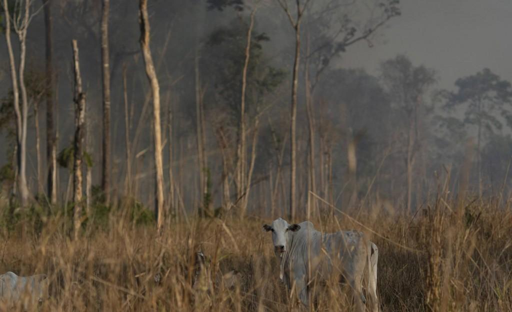 Los incendios en la Amazonia y el trasfondo millonario