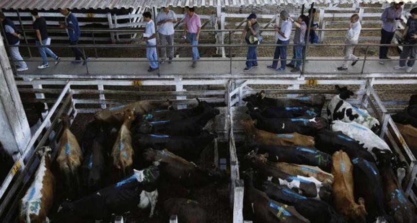 Liniers cerró la semana con saldo positivo en los precios