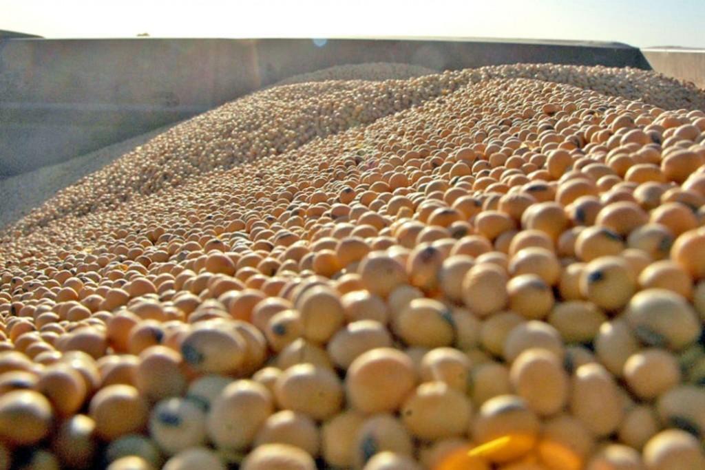 Los futuros de soja, el trigo y el maíz cotizaron con ganancias.