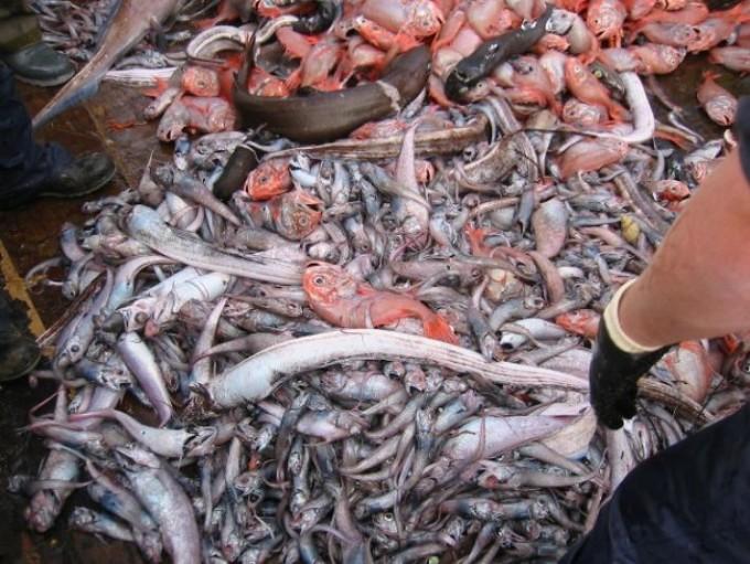 Tras el verdurazo y el frutazo , regalarán pescado en Mar del Plata