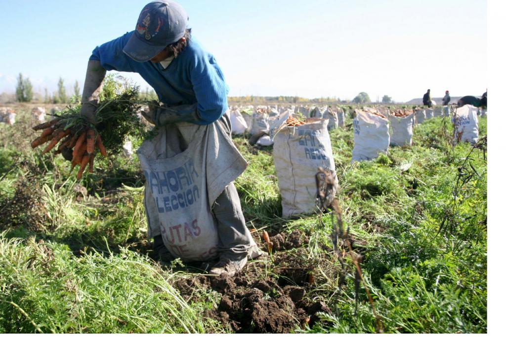 Por falta de mano de obra evita la cosecha de frutas y hortalizas