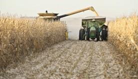 Los impuestos en soja y maíz se lleva el 90% producido