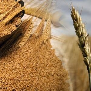 CRA denunció que molinos están abastecidos y no deben subir precio de harina