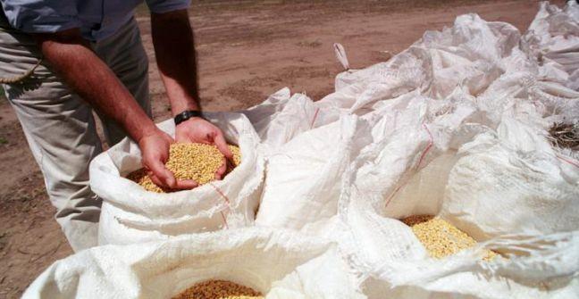 La soja se disparó y cerró en torno a 374 U$S/tn