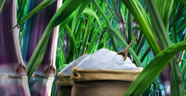 Del azúcar refinado y los derivados de la caña de azúcar