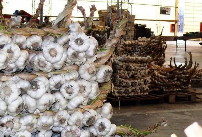 La producción China de ajo frena los precios en Brasil