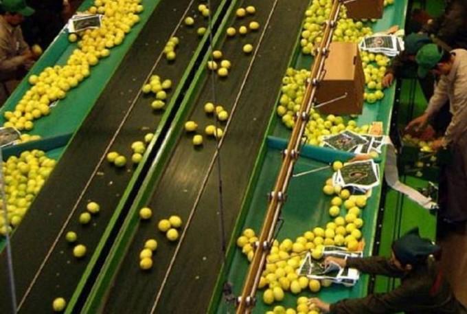 Tucumán buscará negociar la venta de limones a EEUU